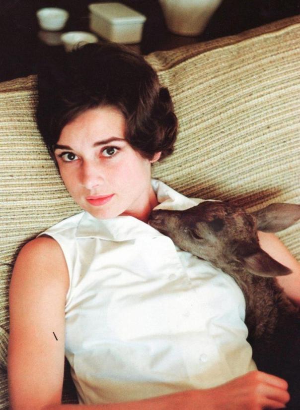 Audrey hepburn deer wir.skyrock.net