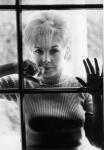 Stella Stevens window (fookdamorph)-1