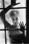 Stella Stevens window (fookdamorph)-2