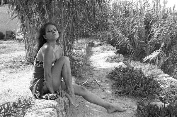 Claudia Cardinale cactus garden-4